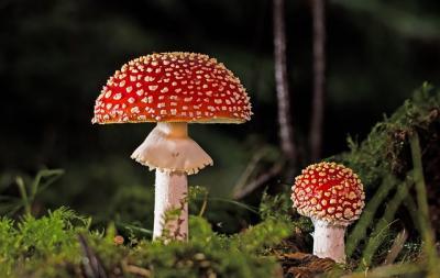 Ilustrační snímek výstava hub